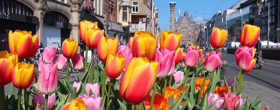 Amsterdam street market flowers