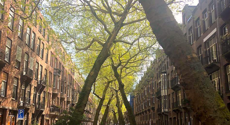amsterdam trees street